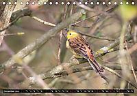 Wildlebende Vögel in Südhessen (Tischkalender 2019 DIN A5 quer) - Produktdetailbild 12