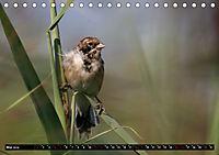 Wildlebende Vögel in Südhessen (Tischkalender 2019 DIN A5 quer) - Produktdetailbild 5