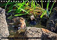 Wildlebende Vögel in Südhessen (Tischkalender 2019 DIN A5 quer) - Produktdetailbild 10