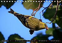 Wildlebende Vögel in Südhessen (Tischkalender 2019 DIN A5 quer) - Produktdetailbild 11