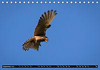 Wildlebende Vögel in Südhessen (Tischkalender 2019 DIN A5 quer) - Produktdetailbild 9