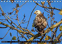 Wildlebende Vögel in Südhessen (Tischkalender 2019 DIN A5 quer) - Produktdetailbild 2