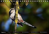 Wildlebende Vögel in Südhessen (Tischkalender 2019 DIN A5 quer) - Produktdetailbild 8