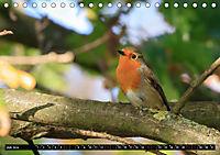 Wildlebende Vögel in Südhessen (Tischkalender 2019 DIN A5 quer) - Produktdetailbild 7