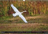 Wildlebende Vögel in Südhessen (Wandkalender 2019 DIN A3 quer) - Produktdetailbild 4