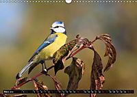 Wildlebende Vögel in Südhessen (Wandkalender 2019 DIN A3 quer) - Produktdetailbild 3