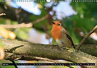 Wildlebende Vögel in Südhessen (Wandkalender 2019 DIN A3 quer) - Produktdetailbild 7