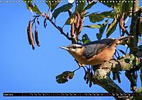 Wildlebende Vögel in Südhessen (Wandkalender 2019 DIN A3 quer) - Produktdetailbild 6