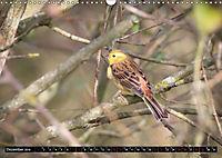 Wildlebende Vögel in Südhessen (Wandkalender 2019 DIN A3 quer) - Produktdetailbild 12