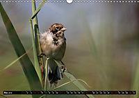 Wildlebende Vögel in Südhessen (Wandkalender 2019 DIN A3 quer) - Produktdetailbild 5