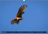 Wildlebende Vögel in Südhessen (Wandkalender 2019 DIN A3 quer) - Produktdetailbild 9