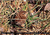 Wildlebende Vögel in Südhessen (Wandkalender 2019 DIN A3 quer) - Produktdetailbild 1