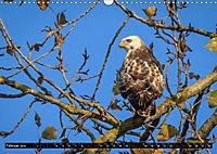Wildlebende Vögel in Südhessen (Wandkalender 2019 DIN A3 quer) - Produktdetailbild 2