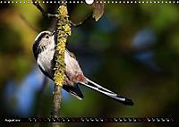 Wildlebende Vögel in Südhessen (Wandkalender 2019 DIN A3 quer) - Produktdetailbild 8