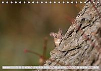Wildlife in Norddeutschland (Tischkalender 2019 DIN A5 quer) - Produktdetailbild 7