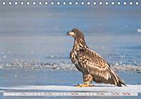 Wildlife in Norddeutschland (Tischkalender 2019 DIN A5 quer) - Produktdetailbild 10