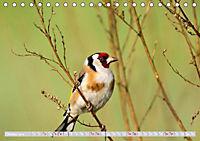 Wildlife in Norddeutschland (Tischkalender 2019 DIN A5 quer) - Produktdetailbild 12