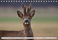 Wildlife in Norddeutschland (Tischkalender 2019 DIN A5 quer) - Produktdetailbild 3
