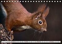 Wildlife in Norddeutschland (Tischkalender 2019 DIN A5 quer) - Produktdetailbild 2