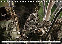 Wildlife in Norddeutschland (Tischkalender 2019 DIN A5 quer) - Produktdetailbild 1