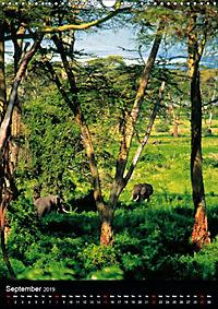 Wildlife in the African Savannah (Wall Calendar 2019 DIN A3 Portrait) - Produktdetailbild 9