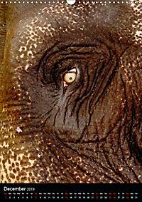 Wildlife in the African Savannah (Wall Calendar 2019 DIN A3 Portrait) - Produktdetailbild 12