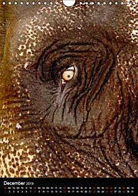 Wildlife in the African Savannah (Wall Calendar 2019 DIN A4 Portrait) - Produktdetailbild 12
