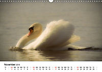 Wildlife of Europe 2019 (Wall Calendar 2019 DIN A3 Landscape) - Produktdetailbild 11