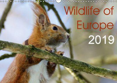 Wildlife of Europe 2019 (Wall Calendar 2019 DIN A3 Landscape), Katja Jentschura