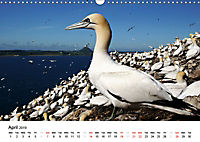 Wildlife of Europe 2019 (Wall Calendar 2019 DIN A3 Landscape) - Produktdetailbild 4