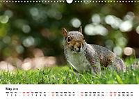 Wildlife of Europe 2019 (Wall Calendar 2019 DIN A3 Landscape) - Produktdetailbild 5