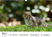 Wildlife of Europe 2019 (Wall Calendar 2019 DIN A3 Landscape) - Produktdetailbild 5