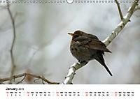 Wildlife of Europe 2019 (Wall Calendar 2019 DIN A3 Landscape) - Produktdetailbild 1