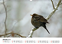 Wildlife of Europe 2019 (Wall Calendar 2019 DIN A3 Landscape) - Produktdetailbild 1