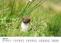 Wildlife of Europe 2019 (Wall Calendar 2019 DIN A3 Landscape) - Produktdetailbild 7