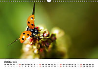 Wildlife of Europe 2019 (Wall Calendar 2019 DIN A3 Landscape) - Produktdetailbild 10