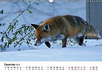 Wildlife of Europe 2019 (Wall Calendar 2019 DIN A3 Landscape) - Produktdetailbild 12