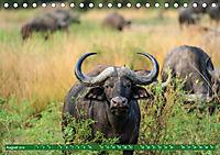 Wildlife Sambia (Tischkalender 2019 DIN A5 quer) - Produktdetailbild 8