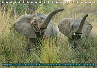 Wildlife Sambia (Tischkalender 2019 DIN A5 quer) - Produktdetailbild 2