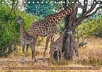 Wildlife Sambia (Tischkalender 2019 DIN A5 quer) - Produktdetailbild 7