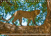 Wildlife Sambia (Tischkalender 2019 DIN A5 quer) - Produktdetailbild 6