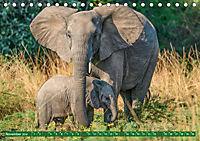 Wildlife Sambia (Tischkalender 2019 DIN A5 quer) - Produktdetailbild 11