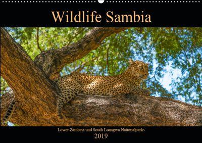 Wildlife Sambia (Wandkalender 2019 DIN A2 quer), Photo4emotion.com