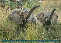 Wildlife Sambia (Wandkalender 2019 DIN A2 quer) - Produktdetailbild 2