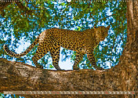 Wildlife Sambia (Wandkalender 2019 DIN A2 quer) - Produktdetailbild 6