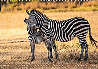 Wildlife Sambia (Wandkalender 2019 DIN A2 quer) - Produktdetailbild 4