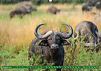 Wildlife Sambia (Wandkalender 2019 DIN A2 quer) - Produktdetailbild 8