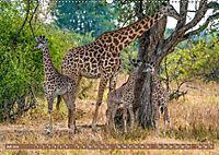 Wildlife Sambia (Wandkalender 2019 DIN A2 quer) - Produktdetailbild 7