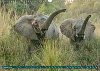 Wildlife Sambia (Wandkalender 2019 DIN A3 quer) - Produktdetailbild 2