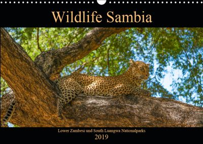 Wildlife Sambia (Wandkalender 2019 DIN A3 quer), Photo4emotion.com